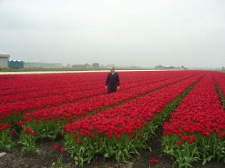 field_of_flowering_bulbs.jpg