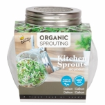 Organic Sprouting pot en verre - Daikon