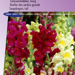 Muflier des Jardins Tip Top Mix