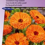 Souci double de Jardins Ball's Orange