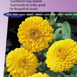 Souci double de Jardins Golden Yellow