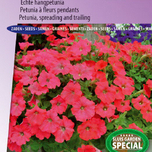 Petunia à fleurs pendants F1 Easy Wave Rouge