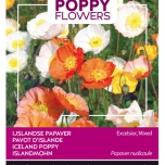 Poppies of the world – Coquelicot Pavot d'Islande