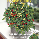 Plante d'Appartement Capsicum Annuum Dwarf Mixed