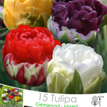 Tulipes Ice Cream en Mélange