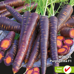 Carrotte Betasweet Purple Elite F1