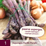 Asparagus Pacific Purple - Asperge