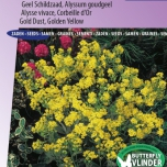 Alyssum Golden Fall - Corbeille d'Or