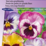 Pensée Aalsmeer Giants, King Size – Viola