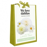 We Love Dahlias – White Love